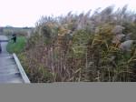 highlands_grass